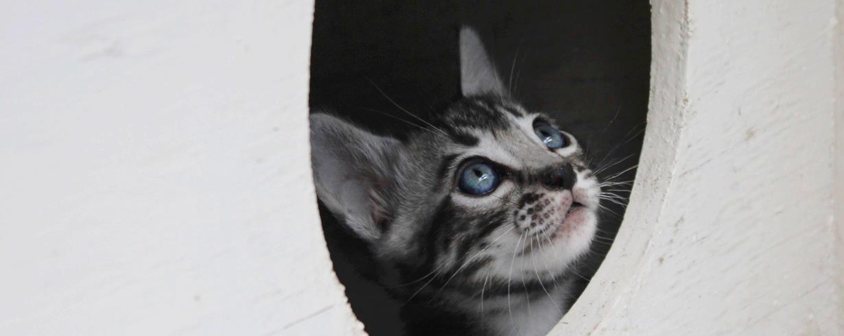 Kitten in round door