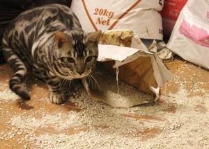 Silverstorm cat litter