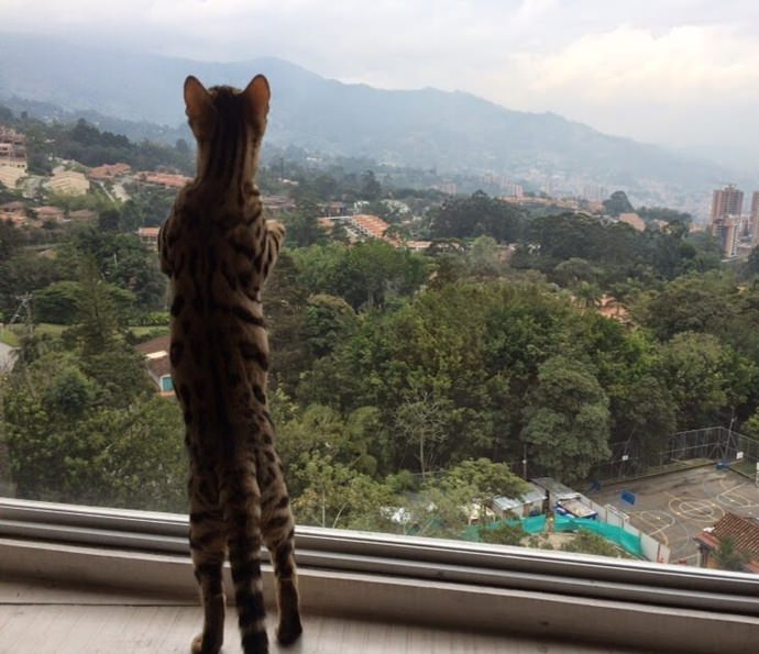 Nala enjoying the view