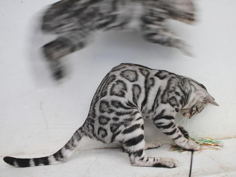 Leap Cat?!