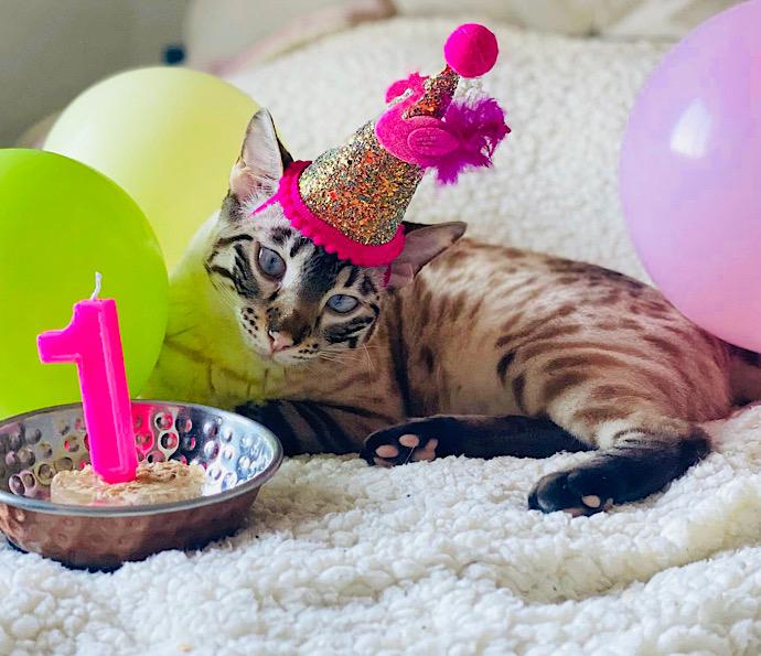 Serafina on her 1st birthday!